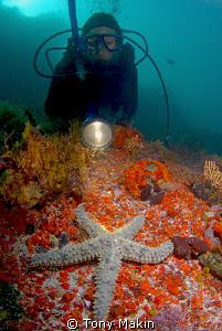 Spiny starfish by Tony Makin