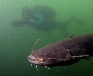 Big catfish with my boyfriend by Veronika Matějková