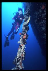 thistlegorm wreack, sinai red sea egypt by Marco Zanini