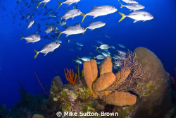 Horse Eye Jacks at Ghost Mountain by Mike Sutton-Brown