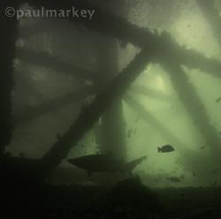 Navy Pier Silhouette by Paul Markey