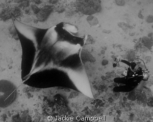 Manta with my dive buddy.....both studying each other !! by Jackie Campbell