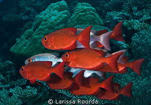 Big Eyes in formation.  Palau. by Larissa Roorda