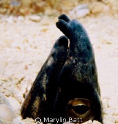 Snake Eel.  Atlantis Resort.  Nikonos V with close up lens. by Marylin Batt