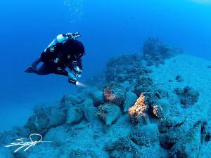 Ancient shipwreck cargo. by Nicholas Samaras