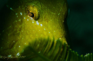 Juvenile trunk shot with a D300, 105mm and fiber optic sn... by George Ordenes