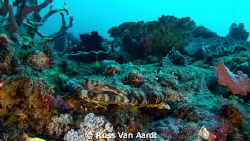Crocodile fish Chilling. by Russ Van Aardt