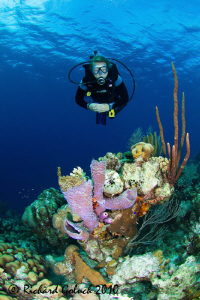 "Diving with my 15 yr. old daughter in Bonaire at ""Old Blue"" by Richard Goluch"
