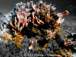 The Sponge by Eric Walker