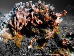 The Sponge by Eric Walker