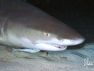 The Lemon Sharks landing and taking off at night was exci... by Steven Anderson