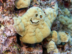 """CASPER"" The friendly coral. by Stuart Ganz"