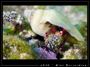 Not easy to be a hermit-crab :-) Those buddies here had s... by Rico Besserdich