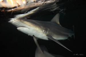 one of the shots taken on the last dive.....hope you like... by Allen Walker