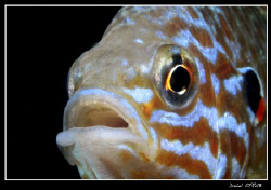 ... :-D pumkinseed sunfish ... soooooo beautiful by Daniel Strub