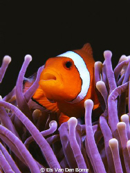 I found nemo by Els Van Den Borre