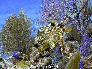 Lunch Time at the aquarium - Elbow Reef Key Largo, FL by Rickey Ferand