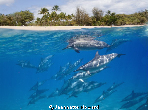 I couldn't get these dolphins to swim closer to the islan... by Jeannette Howard