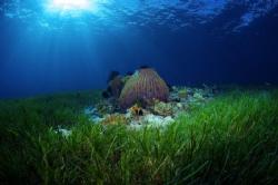 The beautiful sea grass beds of Cabilao. The sun was crea... by Steve De Neef