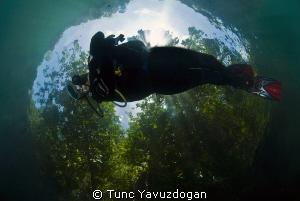 Flying trough the Rain Forest.. by Tunc Yavuzdogan
