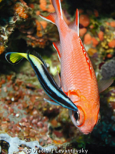 """Big eyed fish"" grooming. Canon T1i in Ikelite housing wi... by Vladimir Levantovsky"