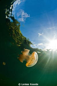 Morning sun at Jellyfish Lake, Palau.  Such a unique and ... by Larissa Roorda
