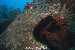 Interior of the Rhone is loaded with coral and other sea ... by Bruce Campbell