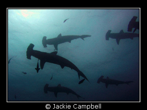 Hammerhead city, aka Darwin Arch, Galapagos Islands.