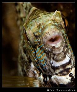Rabitfish closeup ( Nightdive ). CANON 40D with Ike housi... by Rico Besserdich