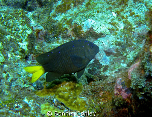 Taken August 2010 in Grand Cayman with a Canon SD 550. by Bonnie Conley