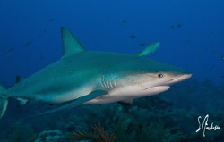 Love the sharks! They sure can put on a great show , this... by Steven Anderson