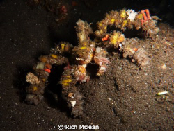 A decorator crab on a Komodo night dive by Rich Mclean