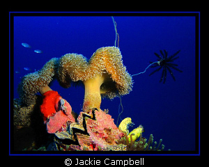 Colour and life on the Shinkoko Wreck, Truk.
