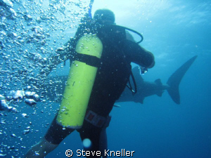 Very candid photo shot at the moment the diver was reacti... by Steve Kneller