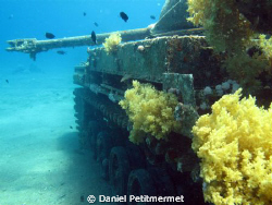 M 42 Duster: easy wreck at 5-6 m deep. Nice luminosity. by Daniel Petitmermet