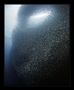 """""""Alien Face""""  Amazing, what sardines do to scare you! by Henry Jager"""