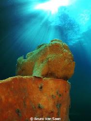 Frogfish posing on his sponge. by Bruno Van Saen