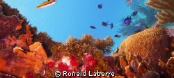 Underwater seascape on the West Bay reef wall, Roatan, Ho... by Ronald Labarre