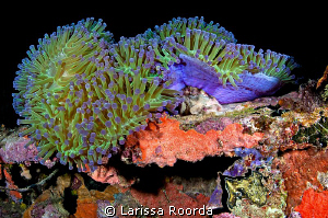 Vibrant night dive. by Larissa Roorda
