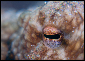 The eye of the beholder, octopus that is. by Juan Torres