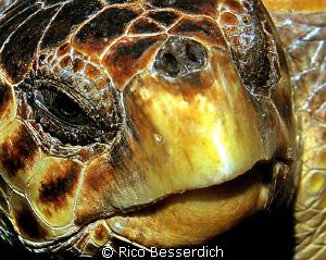 "That's close ! Head of a ""caretta caretta"" sea-turtle. CA... by Rico Besserdich"