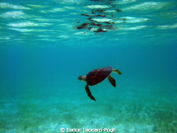 Green turtle swimming in the Tobago Cays, WI. Taken with ... by Eurion Leonard-Pugh
