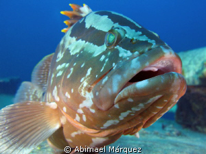 Close encounter with this nassau grouper by Abimael Márquez