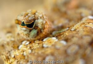 Eye of the flounder. 1/250 s , F: 3,5. 60mm macro lens wi... by Rico Besserdich