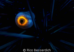 """""""the eye of the urchin"""". No, that's not the eye of the Di... by Rico Besserdich"""