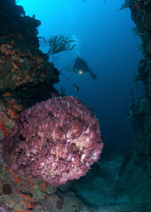 Diver at wall dive, and beautiful barrel sponge. by Juan Torres