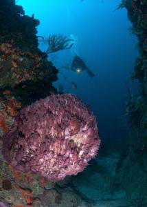 Diver at wall dive, and beautiful barrel sponge. by Juan Torres