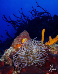 The walls and drop off along the reefs of Cozumel make fo... by Steven Anderson