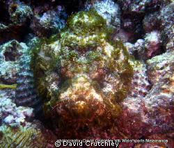 this estuarine stonefish just looks so happy ,from this a... by David Crutchley