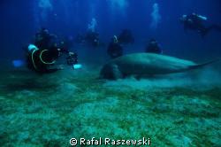 """loneliness"" Nikon D70,Sea&Sea housing,Nikkor 10,5mm,2 x... by Rafal Raszewski"
